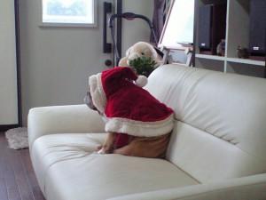 毎日クリスマスだといいのに・・・・